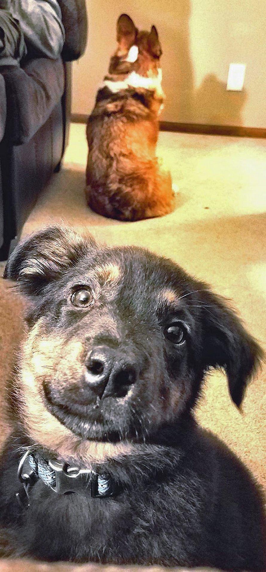 Ces chiens ont vu leur vie parfaite ruinée quand leurs humains leur ont donné un frère ou une soeur plus jeune