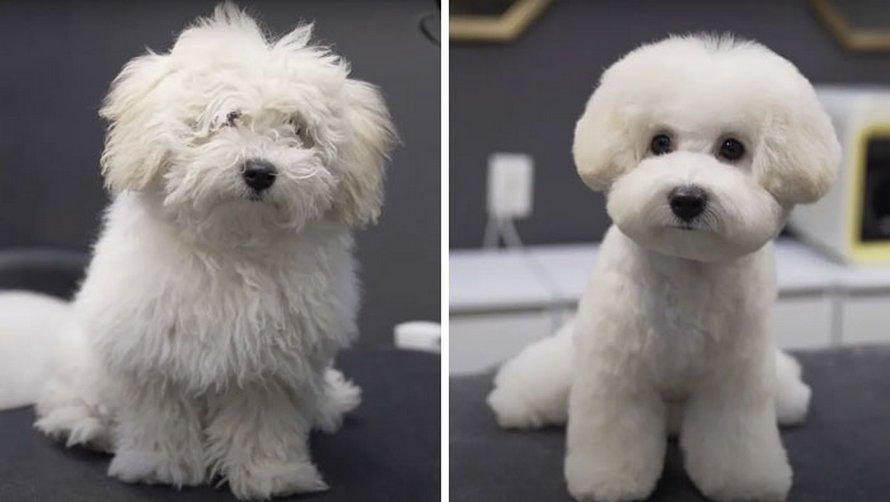 Ces chiens sont presque méconnaissables après avoir vu ces toiletteurs et voici les 22 plus belles coupes