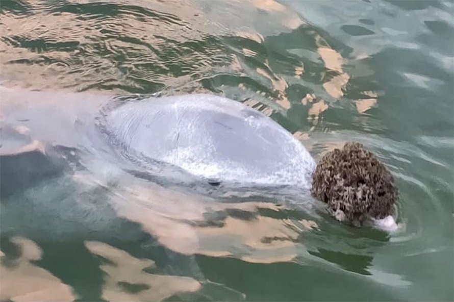 Un dauphin découvre que les humains aiment bien quand il leur apporte des cadeaux du fond de l'océan et il développe l'habitude de le faire