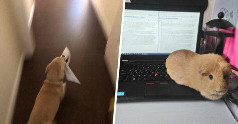 Une prof demande à ses étudiants de montrer leurs chiens faisant du travail en classe et 22 personnes lui envoient leurs photos