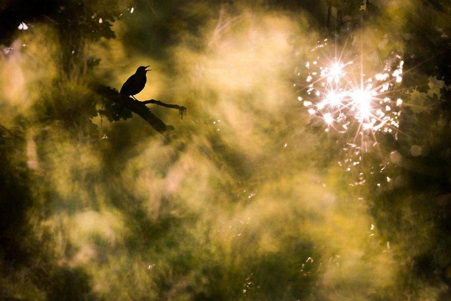 Les photos gagnantes du concours du photographe de nature de l'année 2020 de GDT viennent d'être annoncées et elles sont à couper le souffle
