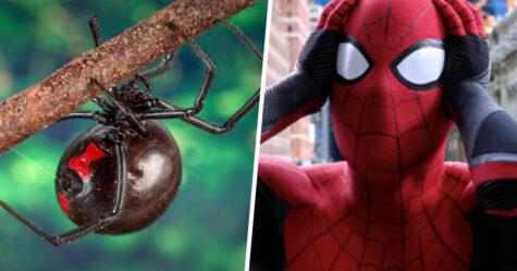 Trois garçons ont été hospitalisés après avoir laissé une veuve noire les mordre pour devenir Spider-Man