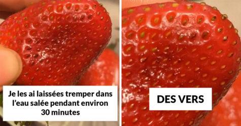 Si tu mets des fraises dans de l'eau salée, de minuscules insectes en sortent