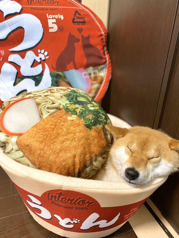 Des gens achètent des lits en forme de bol de nouilles pour leurs animaux et les photos sont trop mignonnes