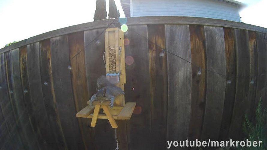 Un ancien ingénieur de la NASA construit une mangeoire à oiseaux à l'épreuve des écureuils et les regarde lutter pour les friandises