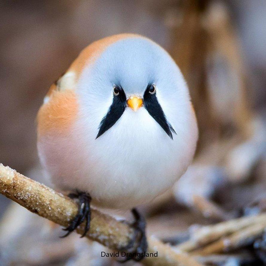 22 oiseaux d'une beauté surréaliste dont tu n'as peut-être jamais entendu parler