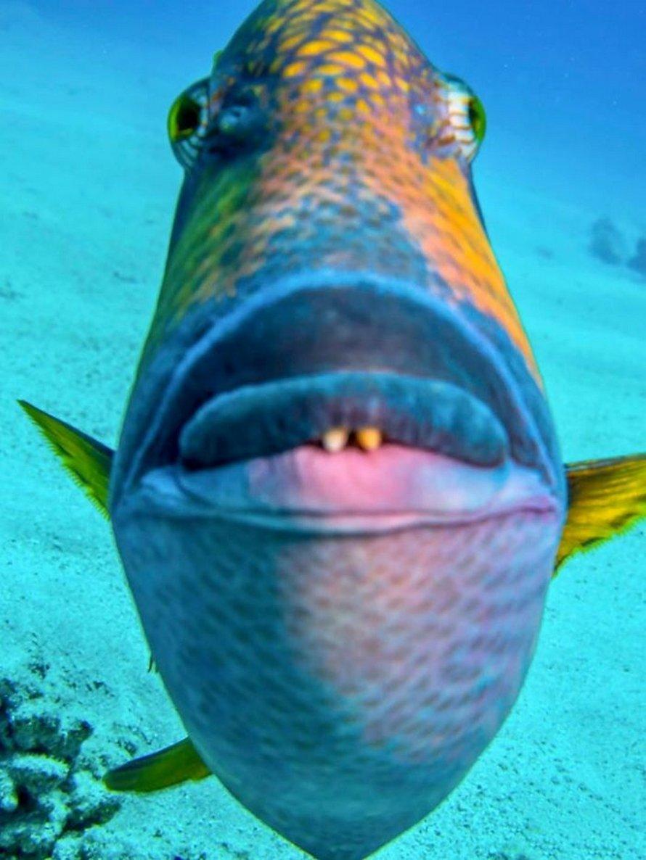 Des gens partagent les pires photos d'animaux sauvages et ces 23 clichés sont si pourris qu'ils sont drôles