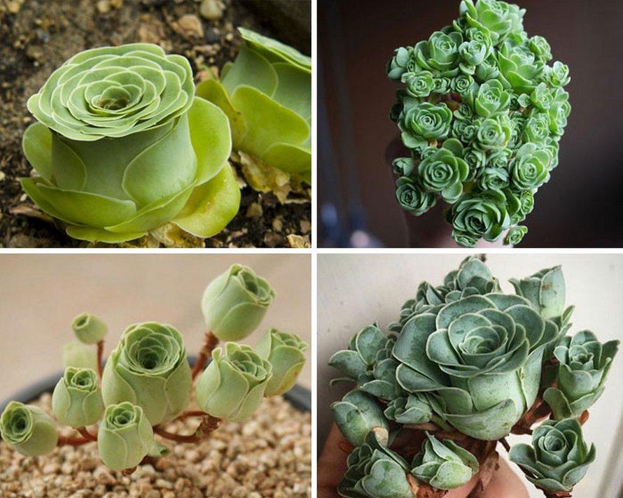 Ces plantes succulentes semblent provenir d'une autre planète et voici les 22 plus insolites