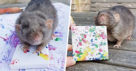 Ces rats adorables créent des peintures miniatures et toutes leurs oeuvres ont été vendues