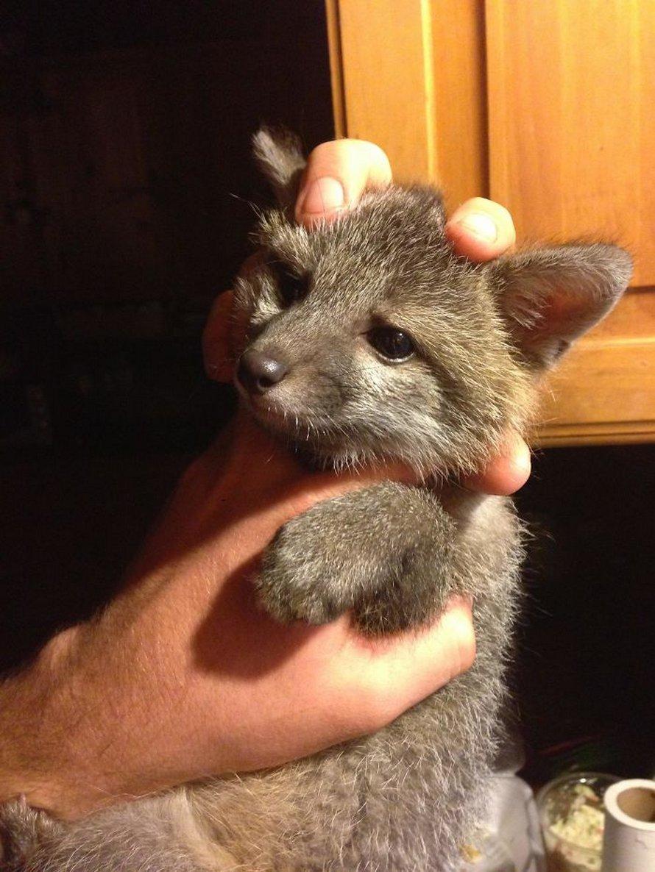 Ces photos de renards montrent à quel point ils sont des créatures merveilleuses