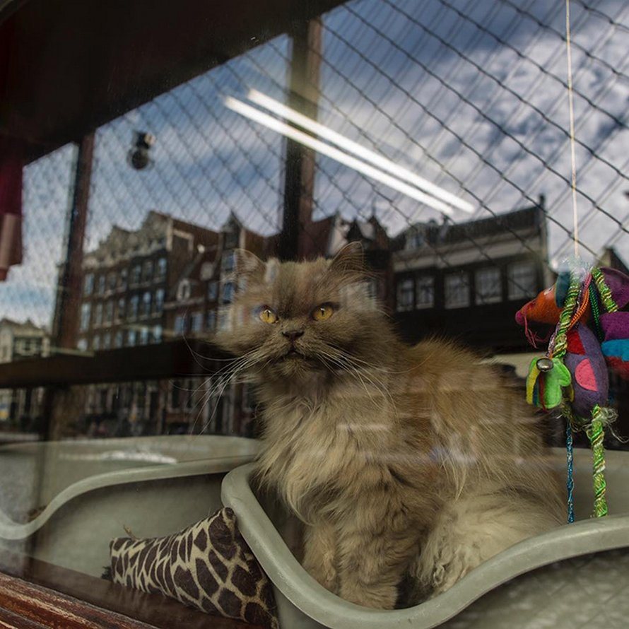 Les gens disent que ce sanctuaire flottant pour chats est l'attraction la mieux cachée d'Amsterdam