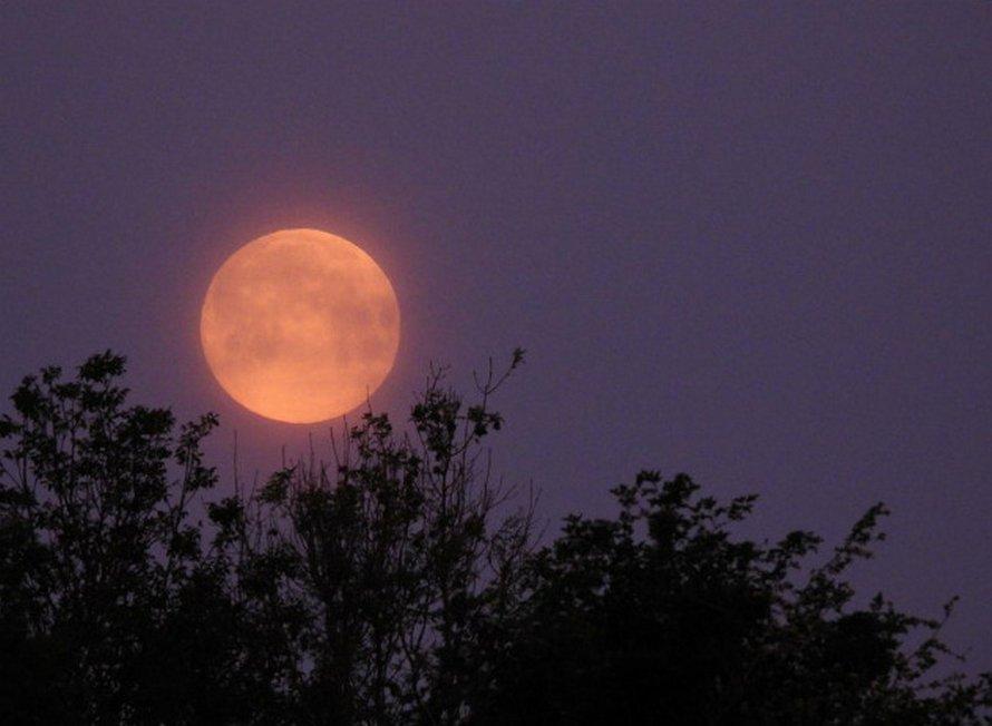 Des gens ont pris de superbes clichés de la dernière super lune de 2020 et voici les 22 meilleurs