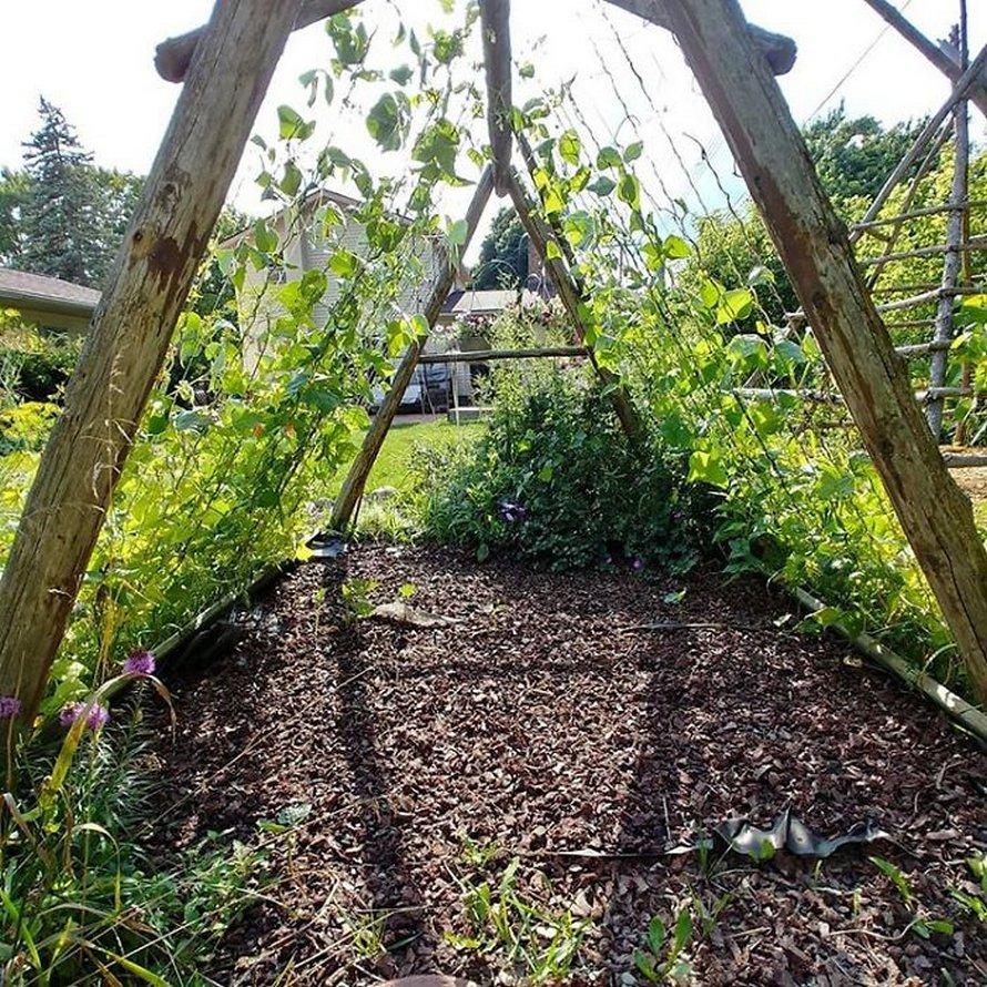 Des gens créent des tentes de jardin magiques avec des haricots pour leurs enfants et voici les 15 plus belles créations