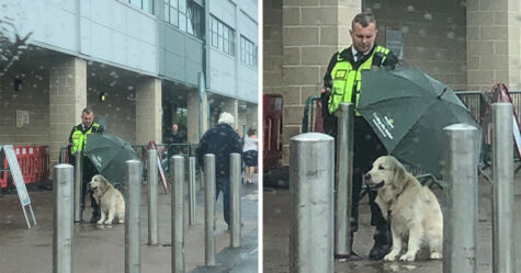 Un agent de sécurité est devenu viral pour avoir protégé un chien de la pluie avec son parapluie