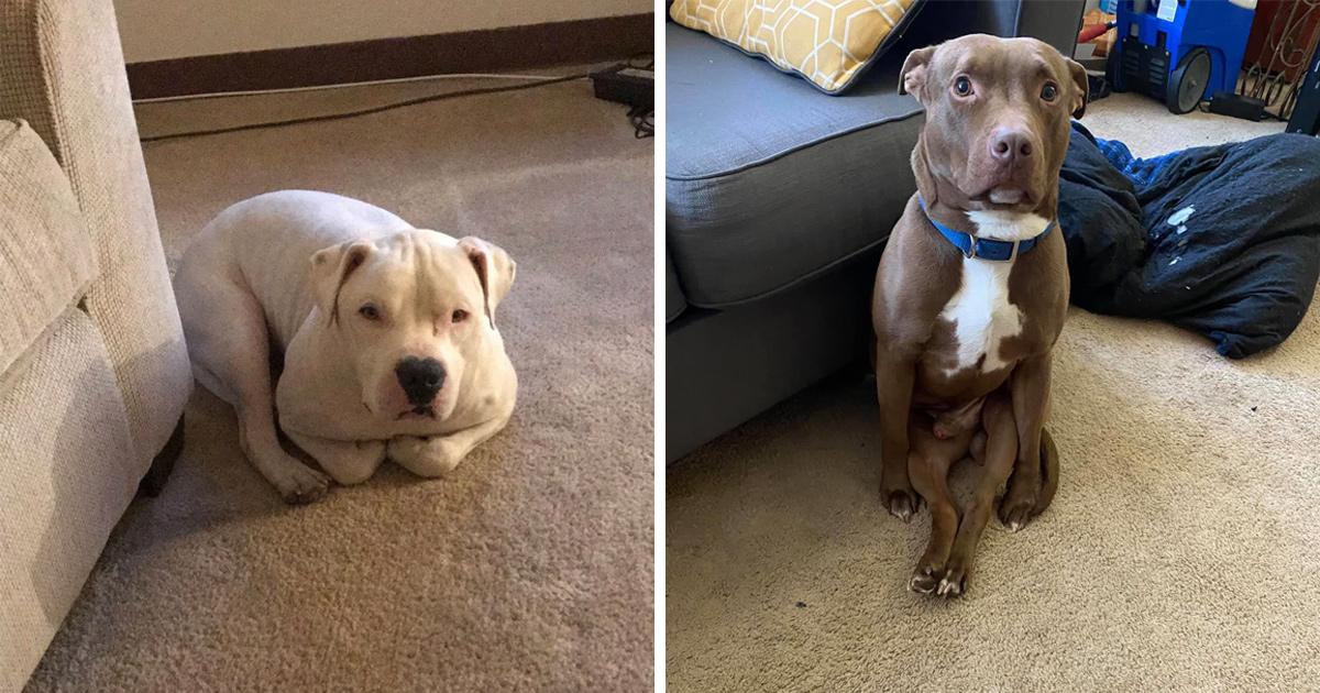 Des gens partagent des photos hilarantes de leurs chiens qui sont assis des façons les plus bizarres