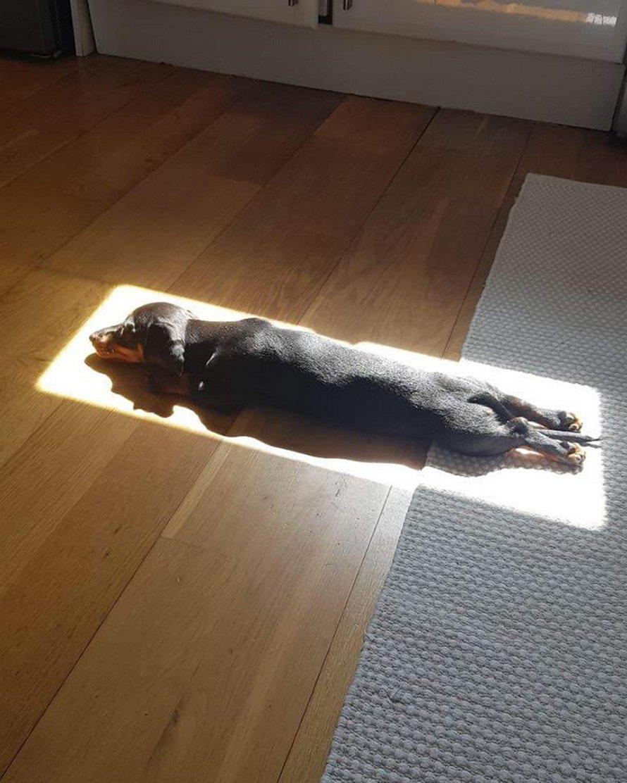 Ces animaux de compagnie alimentés à l'énergie solaire profitent d'un bon bain de soleil