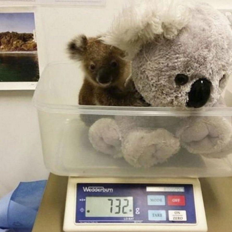 Ces images montrent les astuces que les soigneurs utilisent pour peser différents animaux