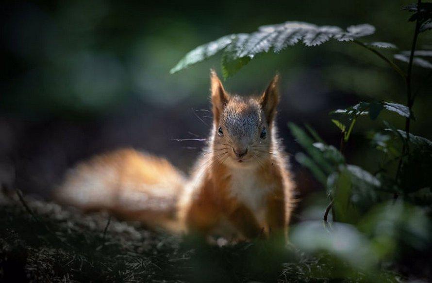 Une photographe place son micro devant un bébé écureuil, et ses adorables bruits de grignotage récoltent près de 13 millions de vues