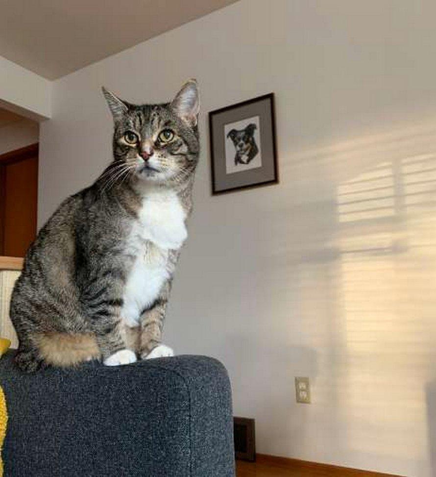 Un chat tombe follement amoureux d'une silhouette en carton de Danny DeVito