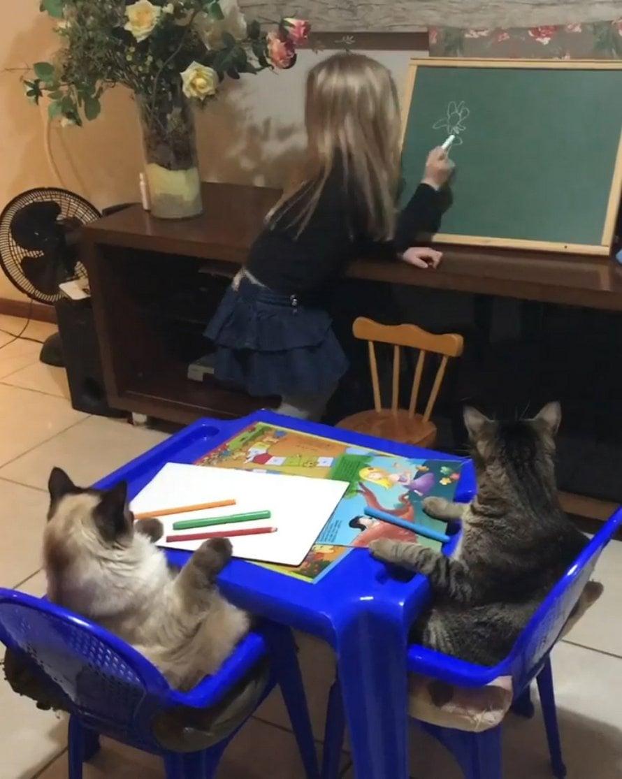 Des chats jouent le rôle d'élèves modèles pendant la leçon de dessin adorable d'une petite fille