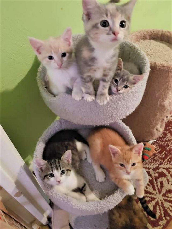 Une maman chatte est folle de joie de retrouver ses chatons perdus dans un refuge