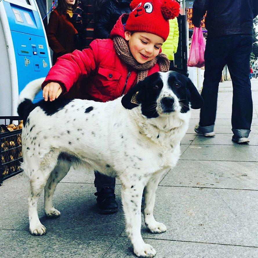 Ce chien vient ici tous les jours et aide les enfants de maternelle à traverser la rue en toute sécurité