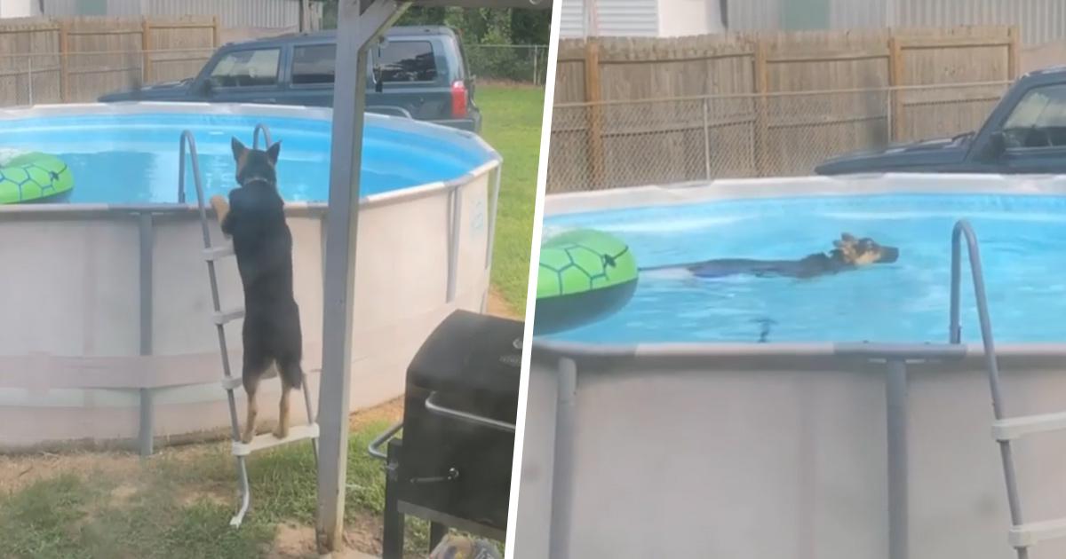 Une famille surprend un chien qui se baigne en cachette dans la piscine