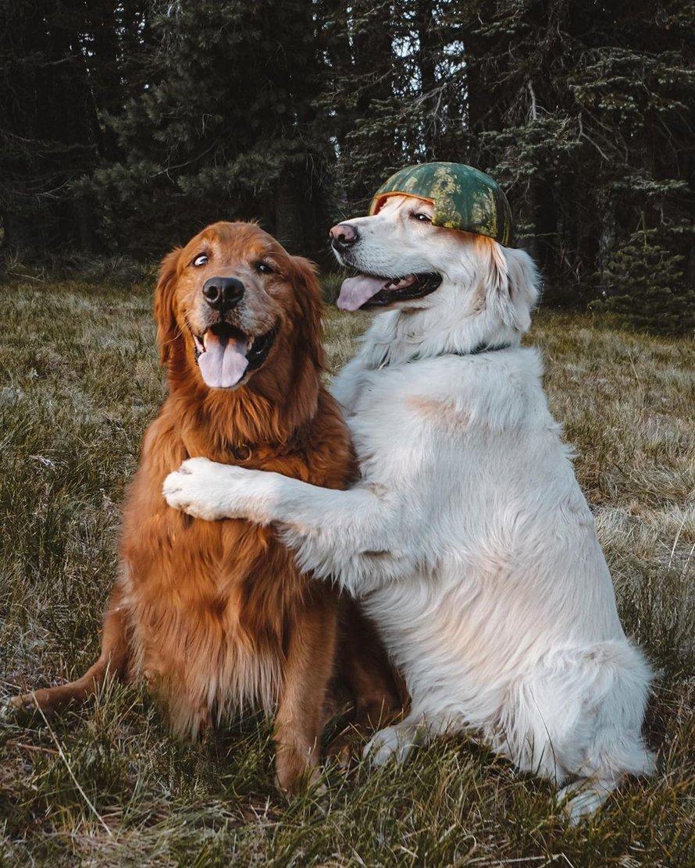 Un chien s'excuse auprès de son frère pour lui avoir volé une friandise en lui donnant un énorme câlin