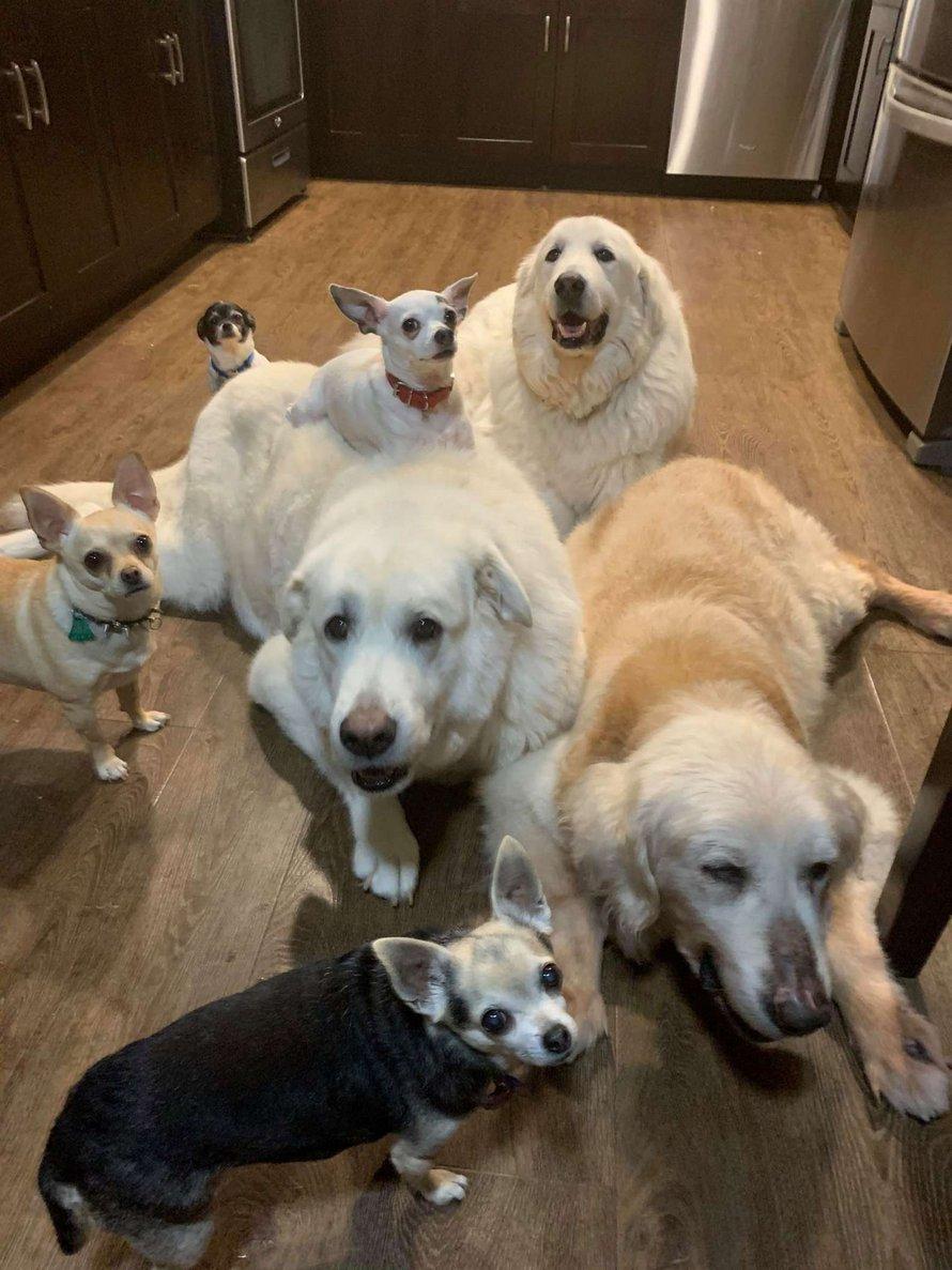 Un chien en famille d'accueil choisit un jouet à l'animalerie et ne veut pas le lâcher