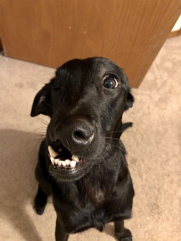 Ce labrador noir né avec un bec de lièvre peut enfin s'amuser dans l'eau après une chirurgie réussie