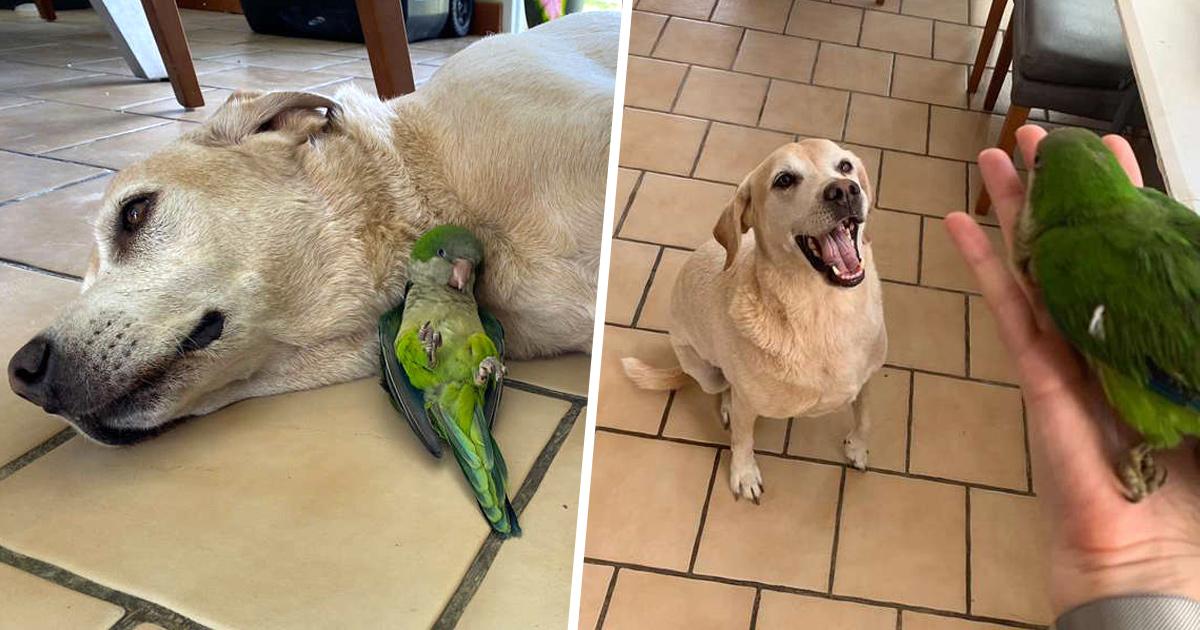 Un chien sauve la vie d'un bébé oiseau et ils deviennent les meilleurs amis