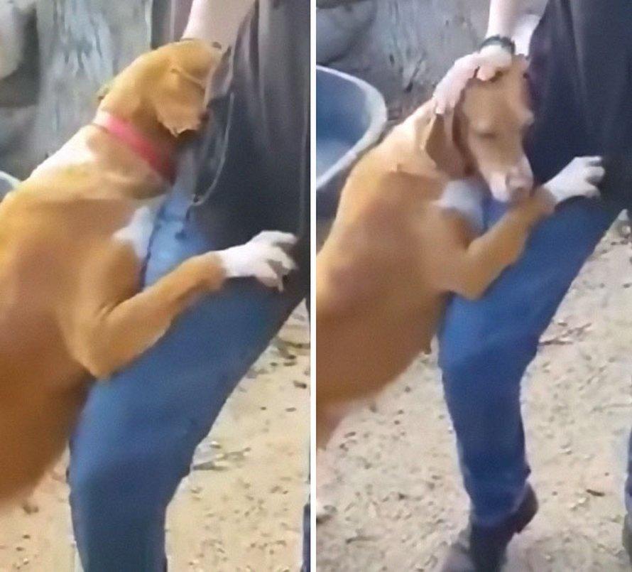 Une chienne fait un câlin à un journaliste qui visite un refuge pour faire un reportage et il décide de l'adopter
