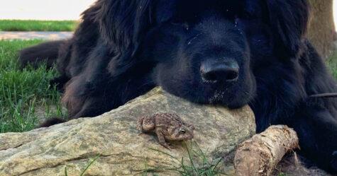 Une chienne et un crapaud sauvage se rencontrent tous les soirs pour passer du temps ensemble