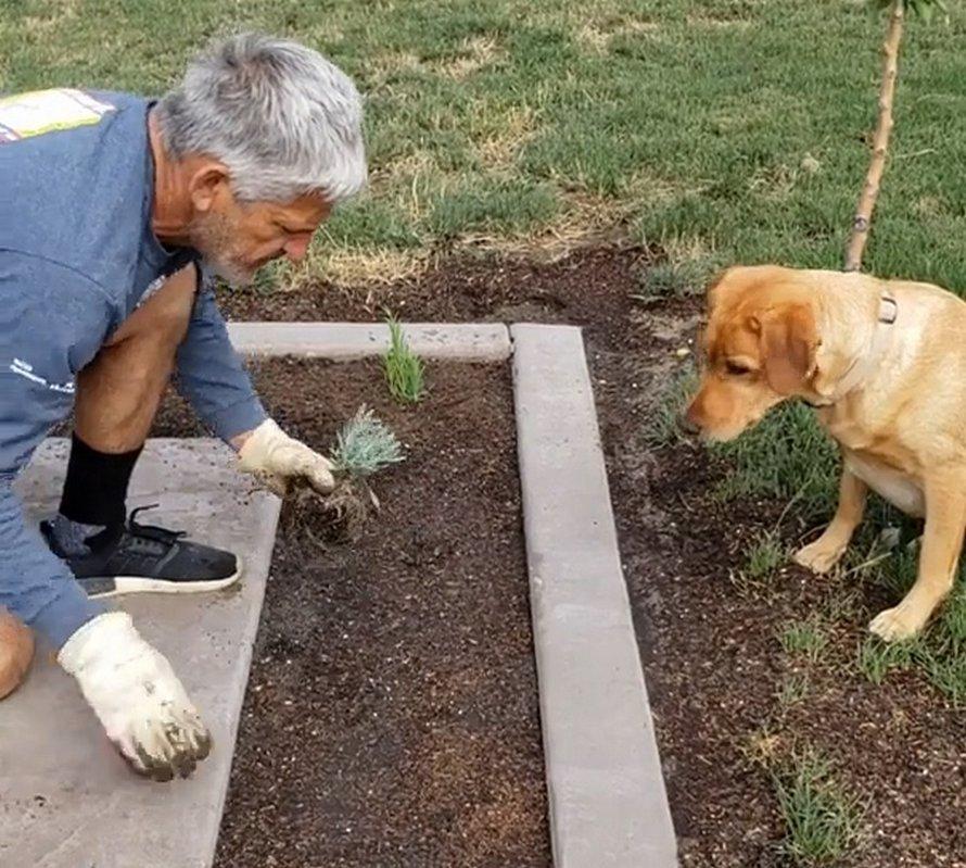 Un jardinier trouve une façon géniale de planter des plantes sans pelle avec sa chienne