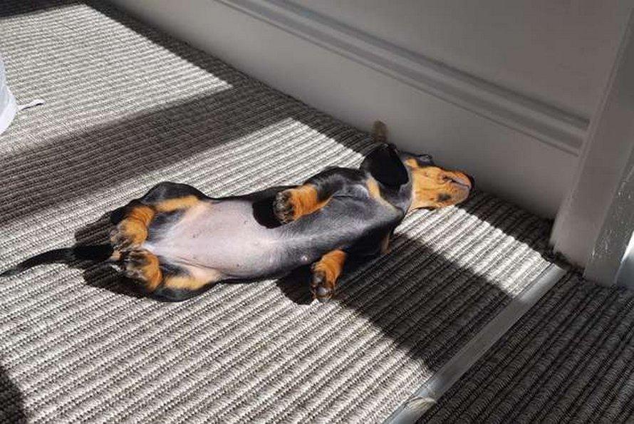 Un chiot qui adore le soleil trouve toujours l'endroit parfait pour faire la sieste
