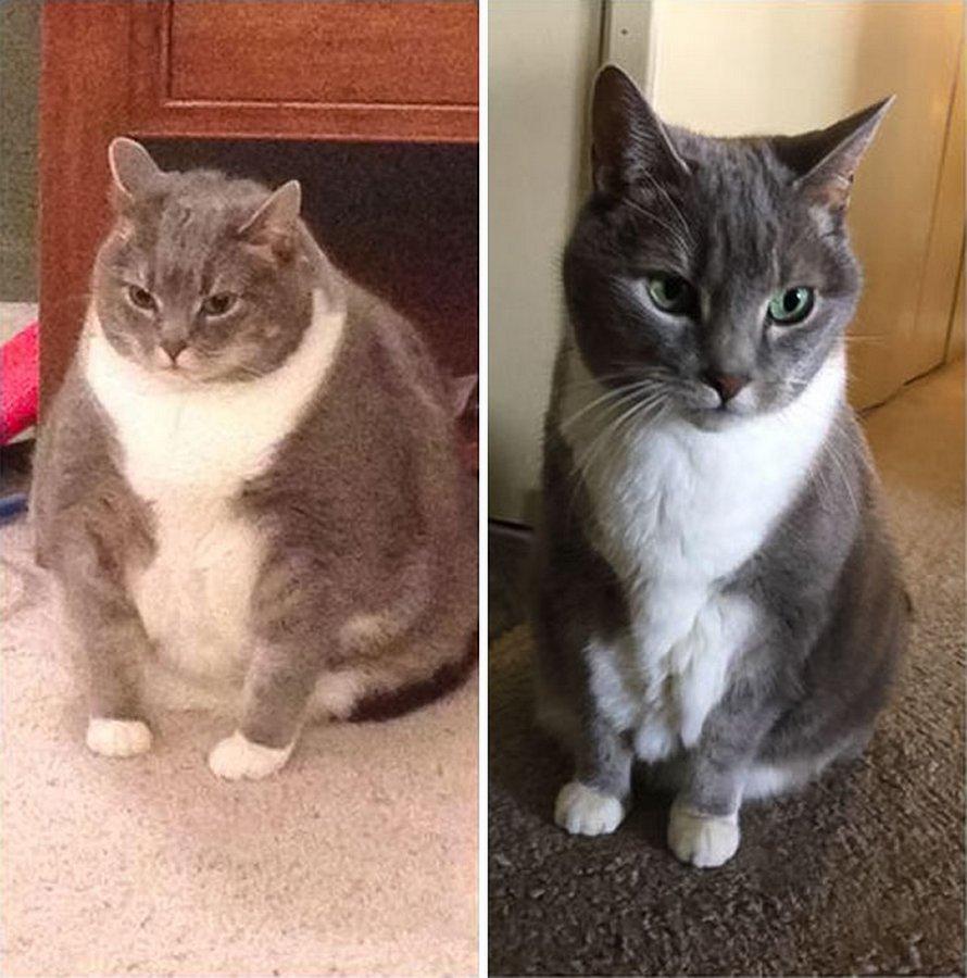 Ces chats ont subi une transformation spectaculaire après avoir perdu du poids