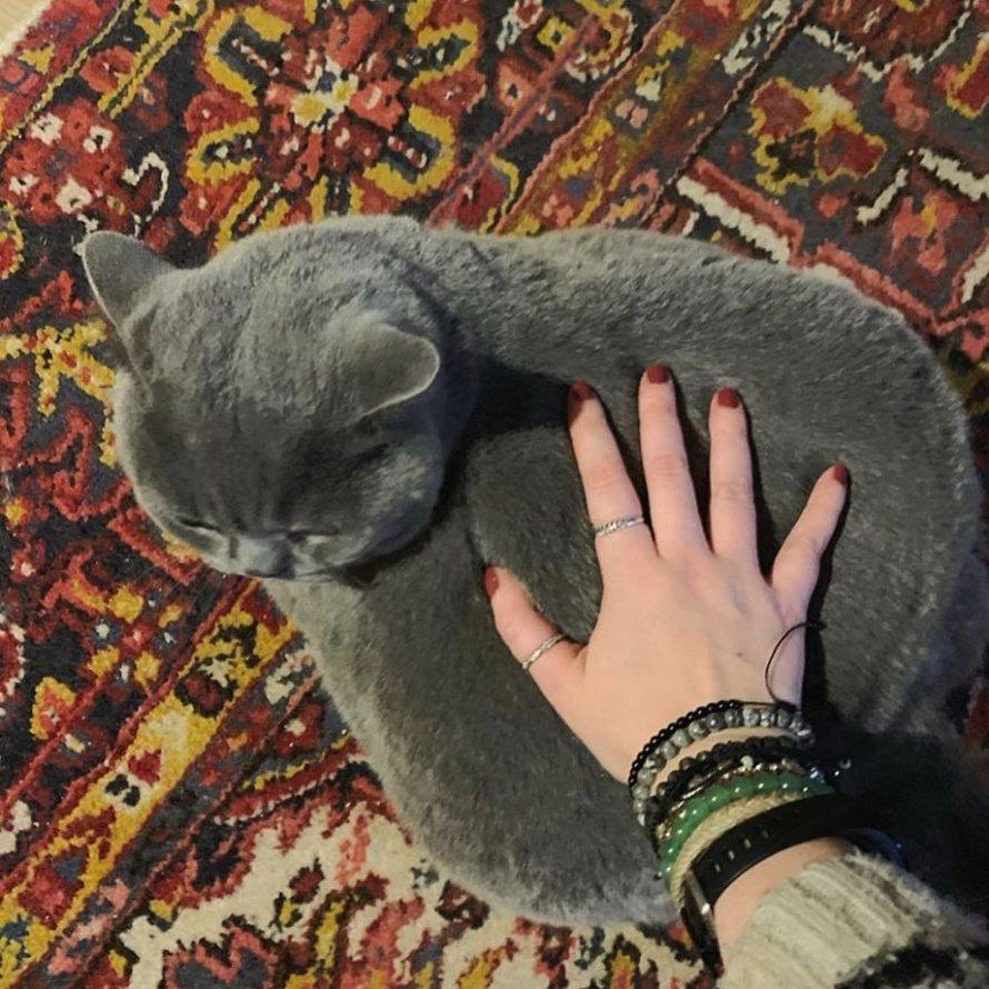 Cette chatte «obèse» était sur le point d'être euthanasiée en raison de sa déformation, mais elle a été sauvée par le vétérinaire