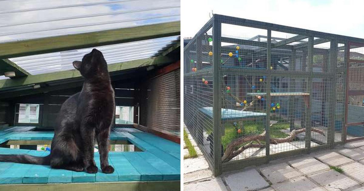 Un homme passe une année entière à construire un espace de jeux incroyable pour sa chatte