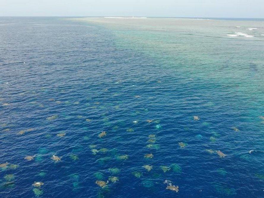 Plus de 60000 tortues vertes s'apprêtent à nicher en Australie et ces images captées par un drone sont à couper le souffle