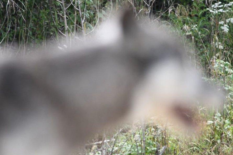 Ces photos d'animaux sauvages sont si pourries qu'elles sont excellentes