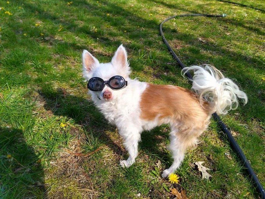 Ces photos de chiens avec des commentaires hilarants vont mettre un sourire sur ton visage