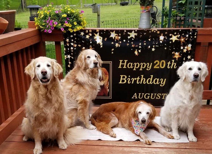 Une chienne célèbre son 20e anniversaire et devient la plus vieille golden retriever du monde