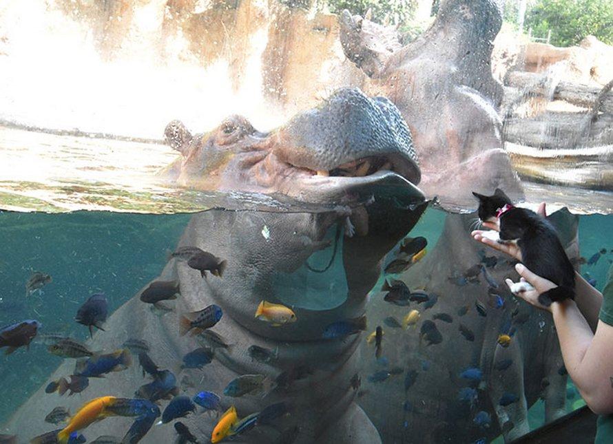 Ces animaux de refuge ont rencontré leurs parents exotiques lors d'une sortie au zoo local