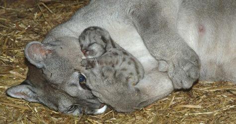 Ces photos attendrissantes prouvent que les animaux sont faits d'amour