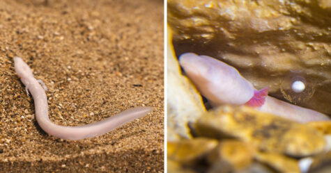 Des «bébés dragons» qui ont éclos dans une grotte seront exposés pour la première fois
