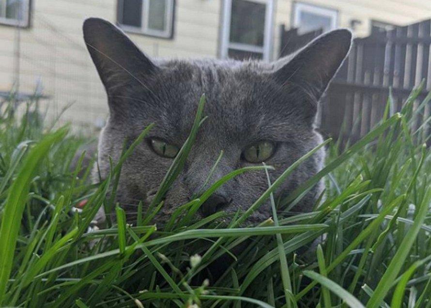 Une femme décide d'aller voir son chat dehors et le trouve avec son «jumeau»