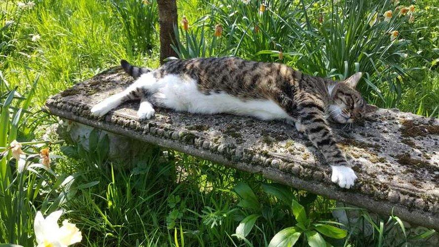 Un chat interrompt une séance de prière virtuelle pour voler une collation