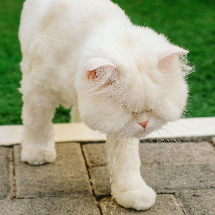 Une chatte persan aveugle a eu droit à une seconde chance dans la vie après avoir été sauvée d'une animalerie crasseuse où elle a perdu la vue