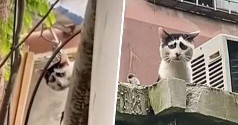 Ce chat a l'air triste en permanence à cause de ses marques faciales uniques
