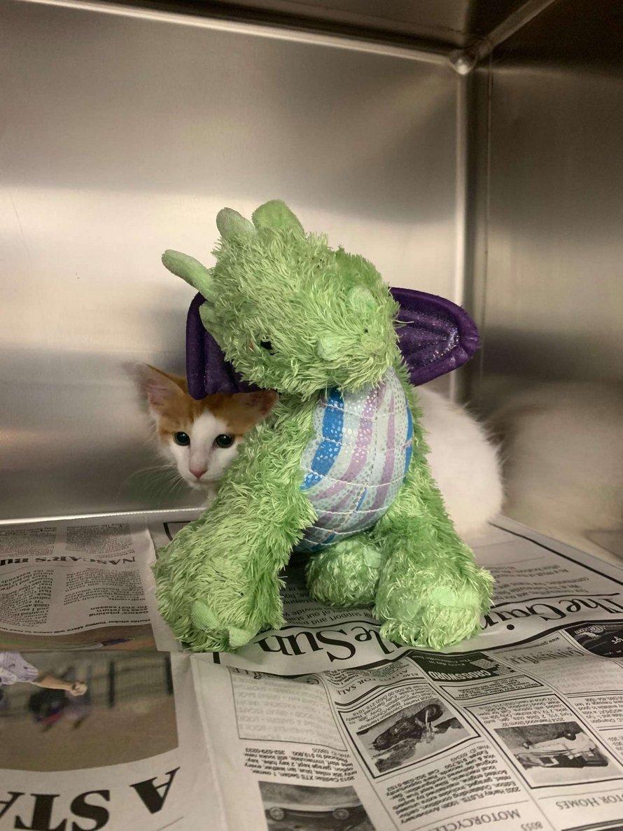 Ce petit chaton apporte son dragon chez le vétérinaire pour avoir plus de courage